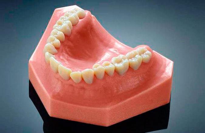 Передние зубы и клыки немного больше остальных форум Стоматология Су 3d teeth jpg